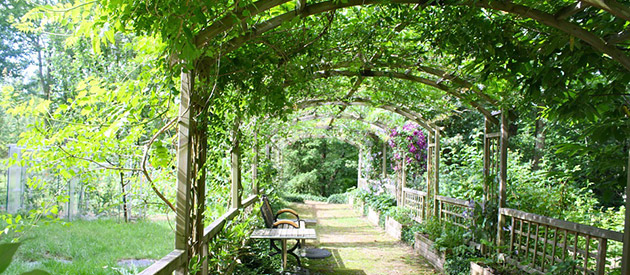 Upgrade your garden with a timber pergola