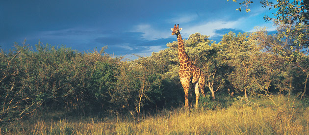 South Africa Joins Hands - The Great Limpopo Transfrontier Park