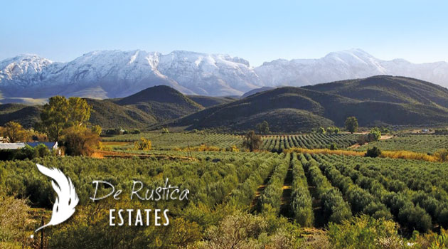 DE RUSTICA OLIVE ESTATE, DE RUST