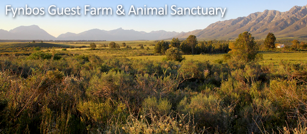 FYNBOS GUEST FARM, CAPE WINELANDS